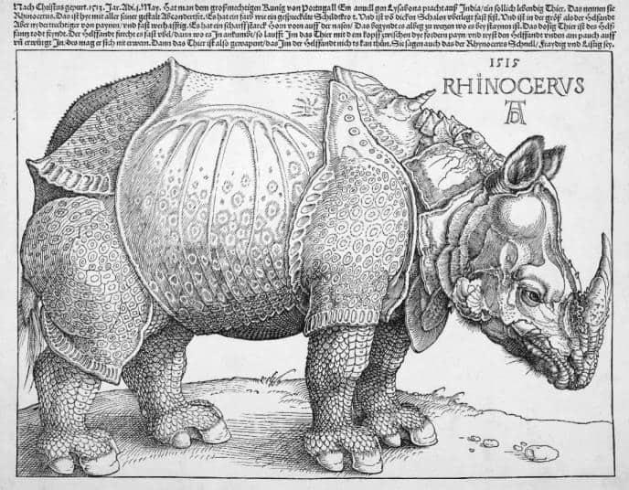 Obraz nosorożca autorstwa Albrecht Dürer