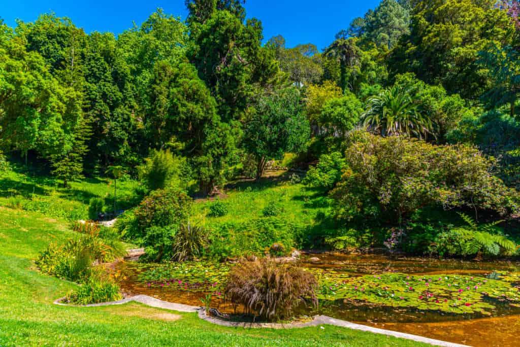 ogród pałacu Monserrate