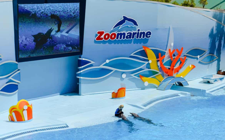 zoomarine - delfiny